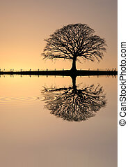 Oak tree in winter at sunset in sillouette against a golden sky with reflection over rippled water.