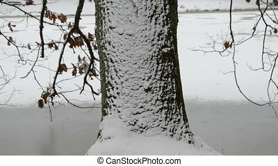 winter oak with snow and pond in the park