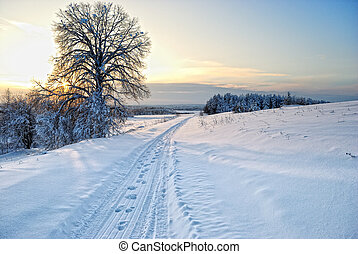 Winter of Siberia - winter sunny frosty morning in Siberia...