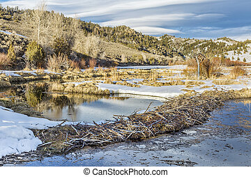 winter on beaver swamp in Northern Park, Colorado at the ...