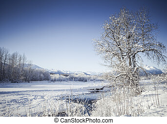 Winter on the Chilkat River
