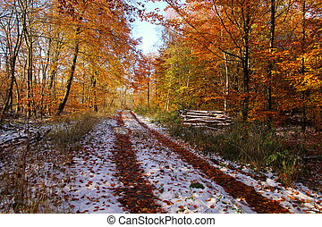 Winter on the road in the forest