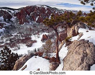 Winter Overlook Tree