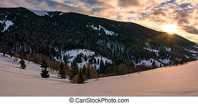 winter panorama in mountains at sunrise. forested hills of...