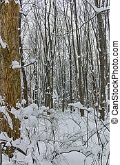Winter Panorama with snow covered trees in South Park in city of Sofia