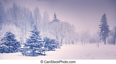 Christmas trees with hoarfrost in park