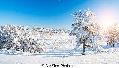 Winter park in snow