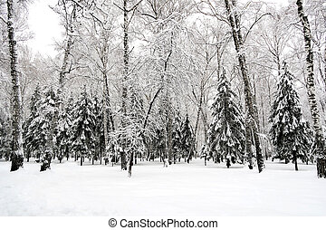Winter Park Landscape with the Trees in the Snow
