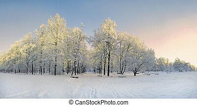Winter park panorama