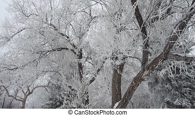 Winter park with snow covered trees