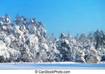 Winter photo landscape