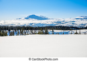 winter picture on bare mountain, trees and a lot of snow