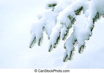 winter, pijnbomen