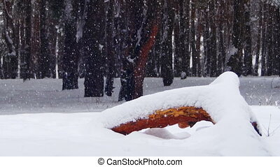 Winter Pine Forest with Snow-covered Wood Log - Snow And...