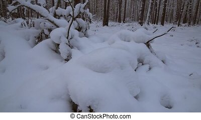Winter pine forest with snow drifts stock footage video