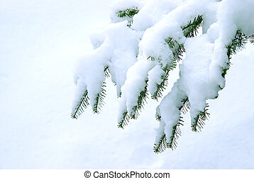 Winter Pines - A branch of pine needles in the cold winter...