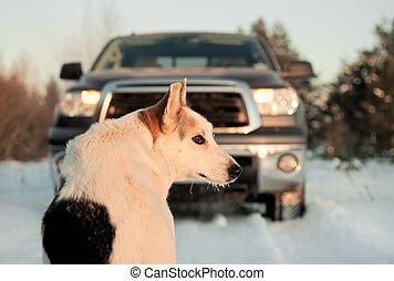 Winter portrait of a dog.
