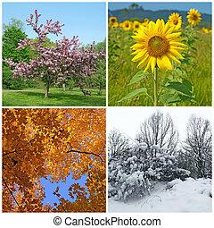 winter., pramen, podzim, čtyři, seasons., léto