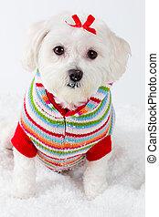 Winter puppy dog wearing striped jumper
