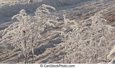 Winter Rally Race - Sport car passes by frosty bushes during...