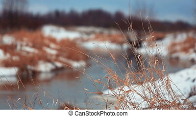 Winter River and dry grass on its b