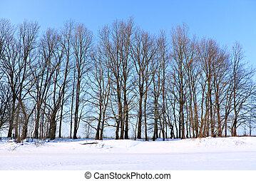 winter riverside wood