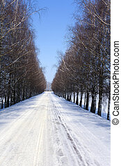 winter road  . birch