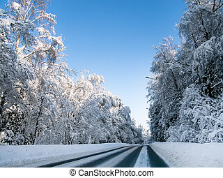 Winter road in a forest