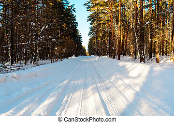 Winter road in the coniferous forest