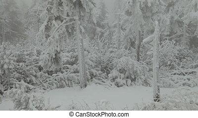 Winter road in the Czech Republic.