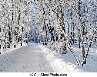 Winter road running between the frozen trees
