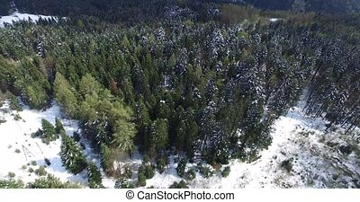 Winter rolling hills to the horizon. Pine forest. Aerial view