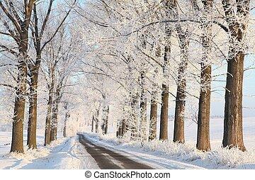 Winter rural lane at dawn