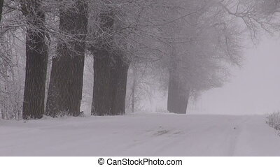 Winter rural snowy road with tree