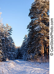 Winter. Russian forest