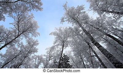 Winter snow landscape.