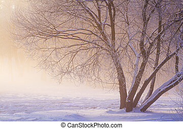 Winter scene. Frosty winter landscape. Frost and snow at winter morning. Christmas background. Natural view on winter tree in park in golden sunlight.