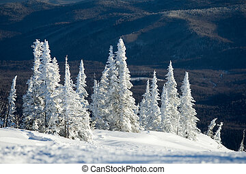 Image of beautiful trees covered with snow in winter forest