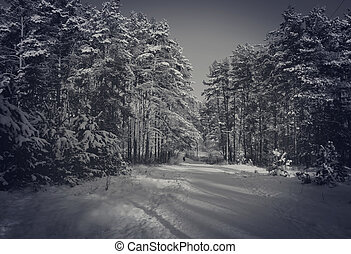 Winter scene in black and white