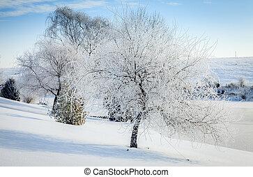 Winter scene in Central Kentucky