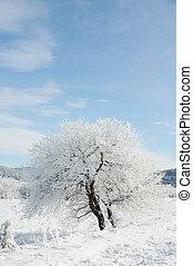 Winter scene, natural beauty