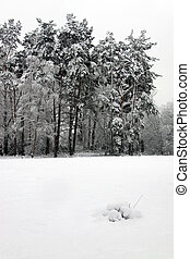 Winter scene of forest trees and snow