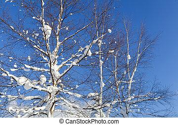 Winter scene of leafless trees in morning light