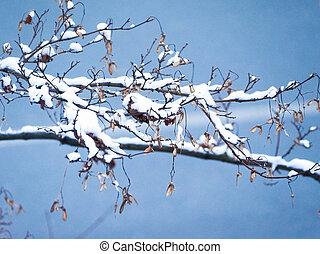 snow on maple tree