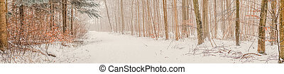 Winter scenery in a forest with snow