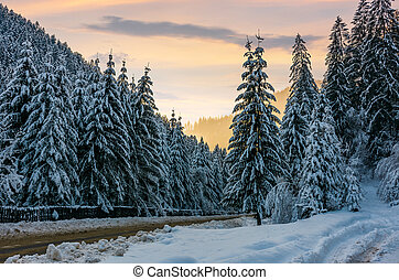 winter scenery in spruce forest. beautiful nature background...