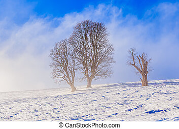 Winter scenery in the ski resort Soll, Tyrol, Austria