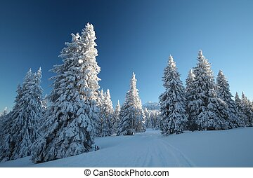 Winter scenery on a sunny morning