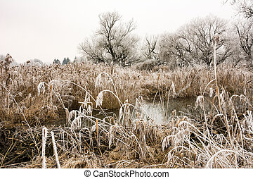 Winter scenic at the river Paar - Frosted trees at the river...
