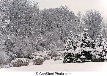 Winter Scenic Landscape - View of a winter scenic landscape...
